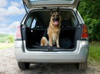 Road Trips: Safe Traveling with Pets
